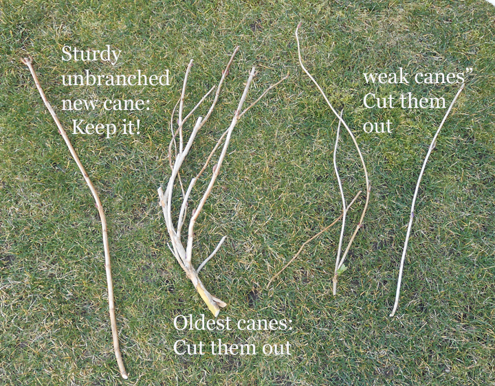 Comparing the three types of canes involved.