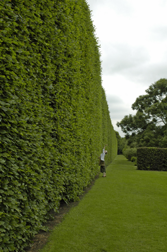 Garden A To Z Big Hedges