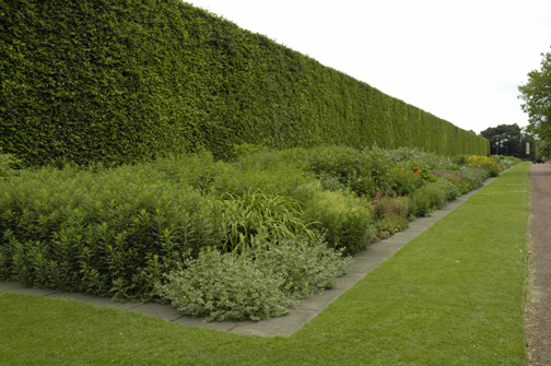 Youu0027ll See Trees As A Hedge, For Maximum Longevity And Height. This